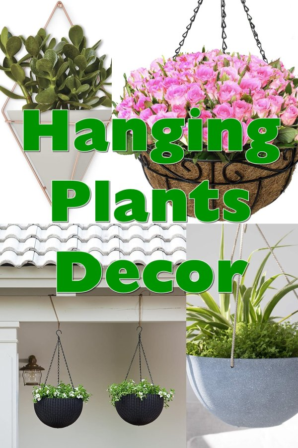 Add Hanging Plants To Your Decor