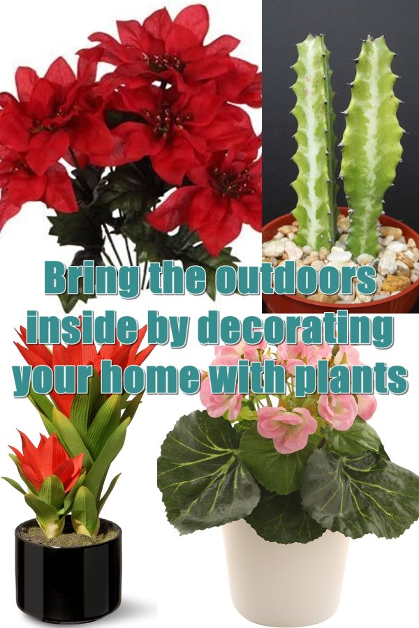 The Top Four Houseplants That Are Sure To Compliment Any Home